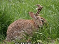 Can-You-Catch-a-Jackalope