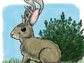jackalope-from-jim-mchugh